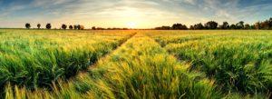 Header-Grassy-Field